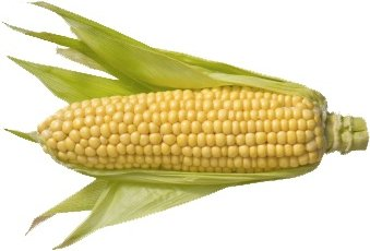 GE Corn